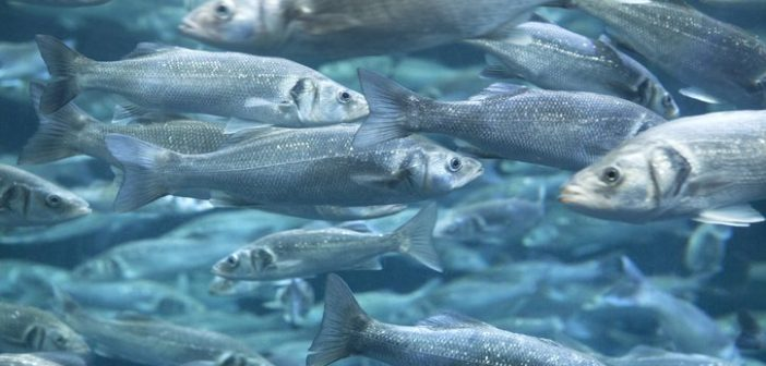 FAO injects money in aquaculture